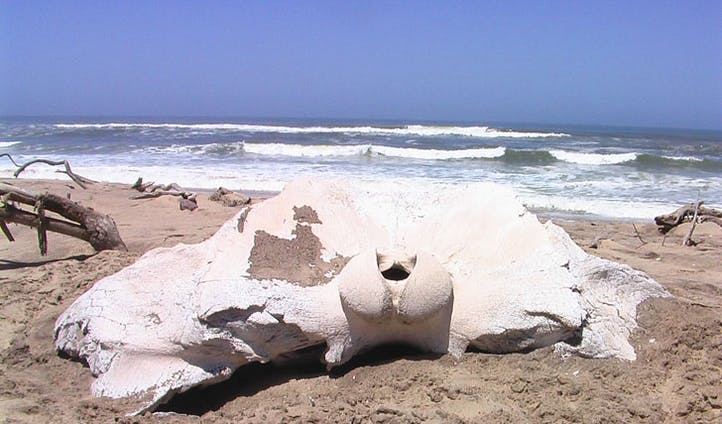 Bones on Skeleton Coast