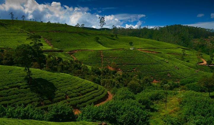 Roam the lush countryside of Sri Lanka