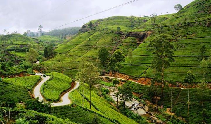 The highland tea trails of Sri Lanka
