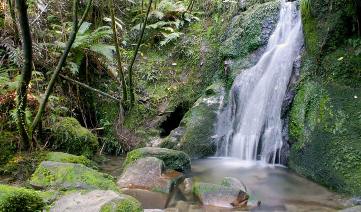 A waterfall crashes into the undergrowth of Abel Tasman, NZ