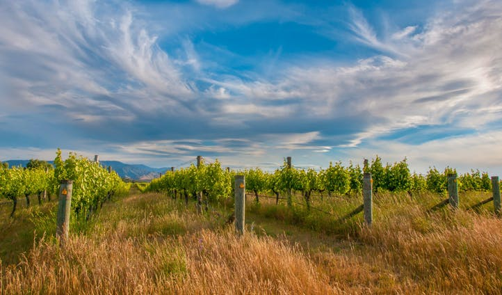 The vineyards of New Zealand
