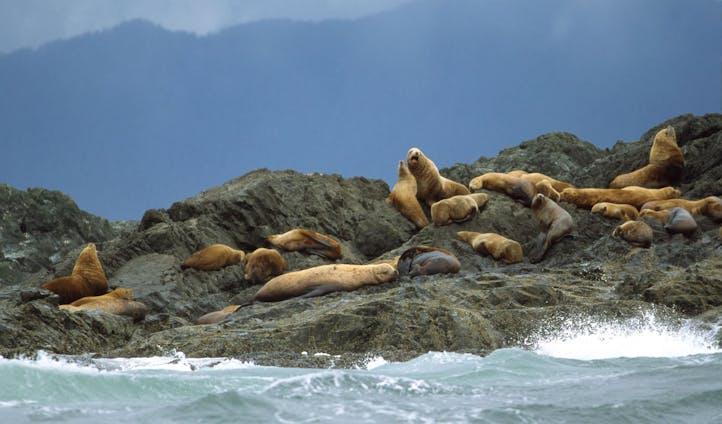 Rugged coastlines and stunning wildlife