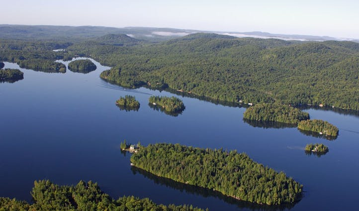The deep hued forests of Quebec