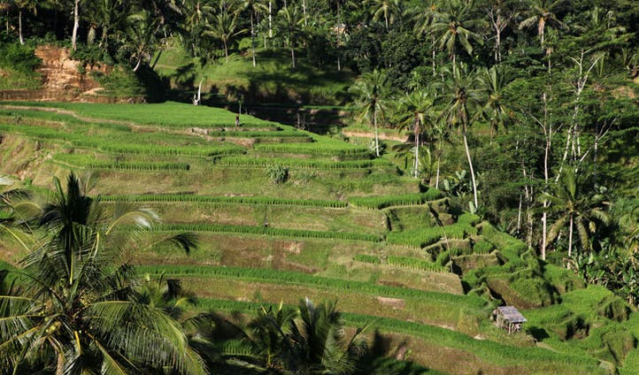 Relax in style in Ubud