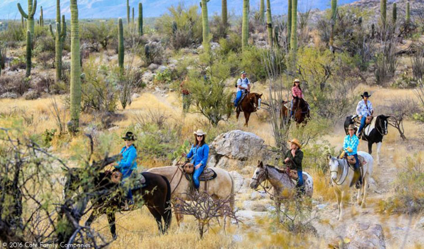 explore the desert surrounding tanque verde