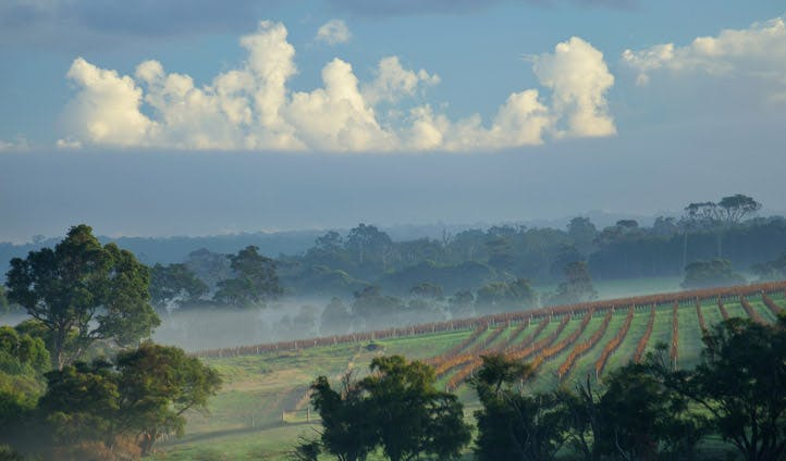 Margaret River's vineyards covered in mist