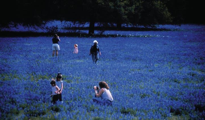 bluebonnets, austin