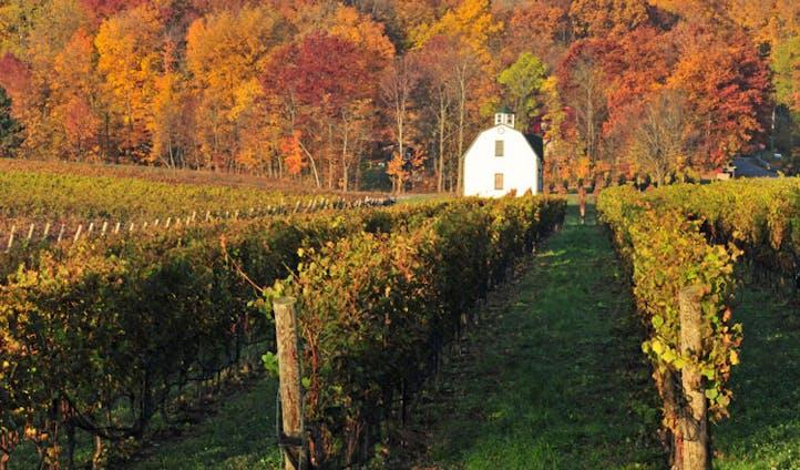 The wine region in Niagara