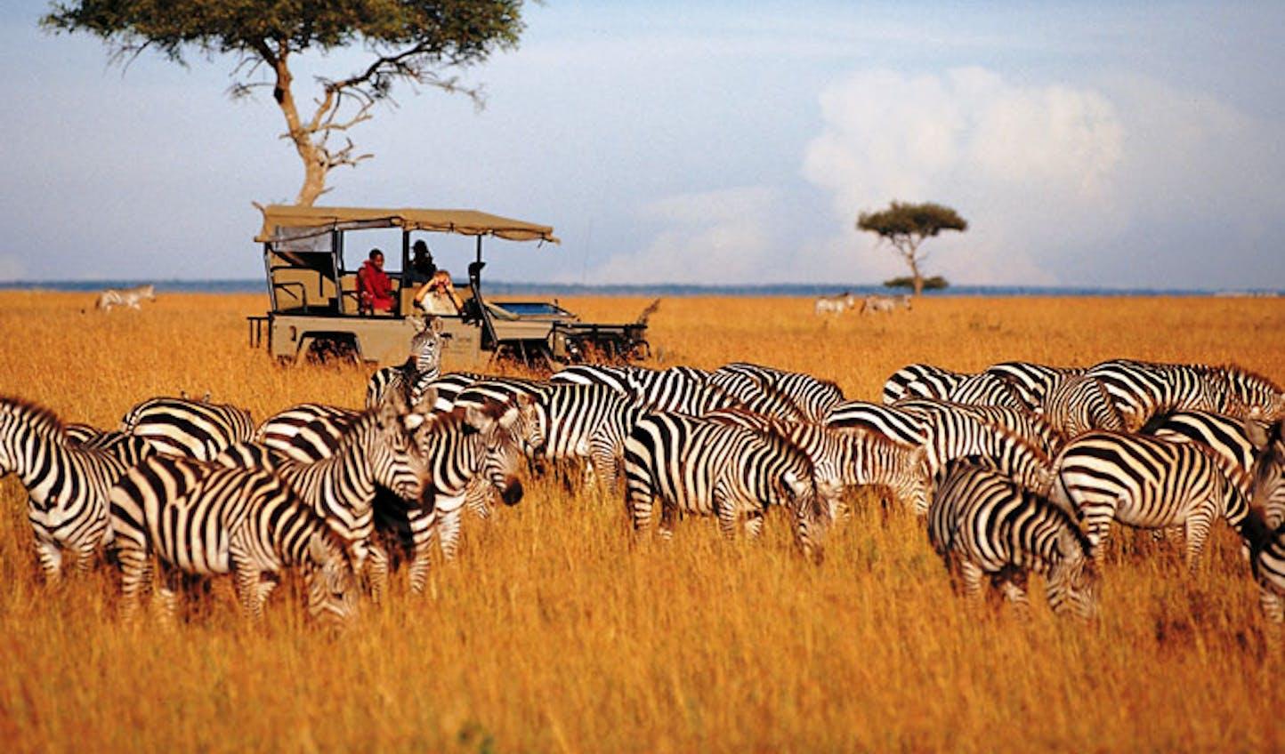 Safari jeep with zebra