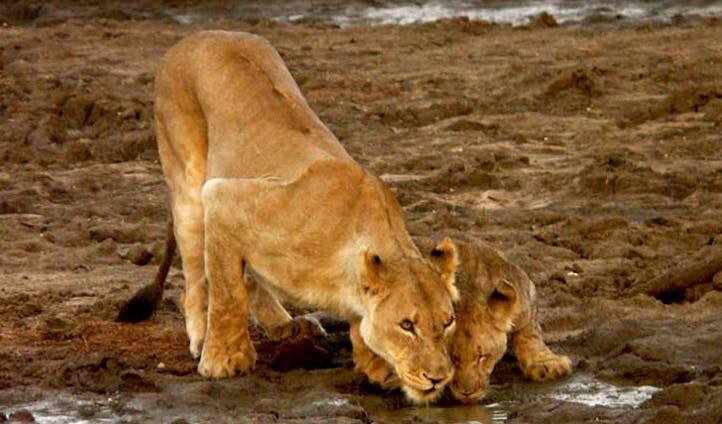 A safari through South Africa