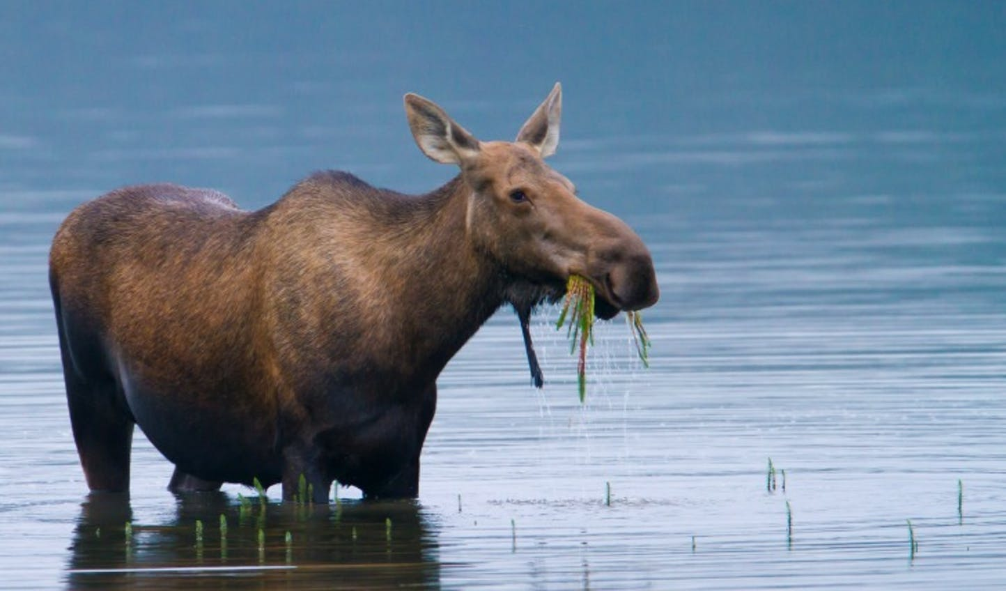Get up close and personal with Alaska's famed wildlife
