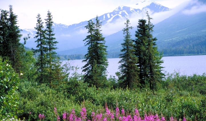 Holidays in Alaska | USA luxury holidays with Black Tomato