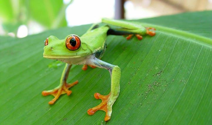 Luxury Costa Rica holidays