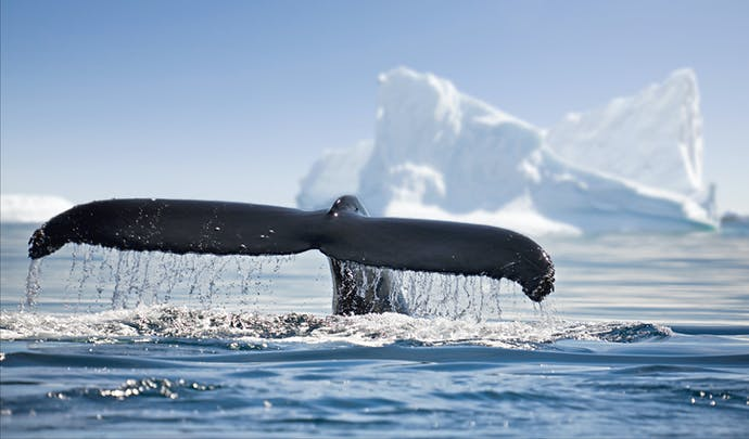Antarctica luxury vacations