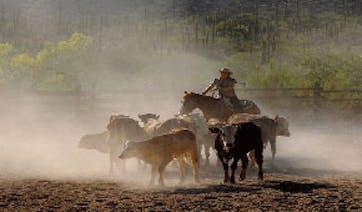 Horseride like a cowboy Arizona