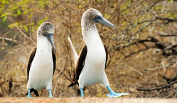 Galapagos Islands Darwin