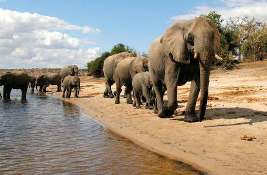 Elephants on luxury safari in Botswana