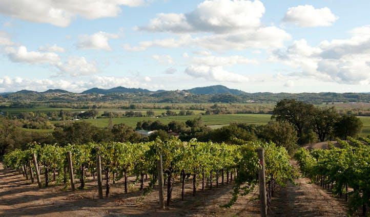 Vineyards in Sonoma, California