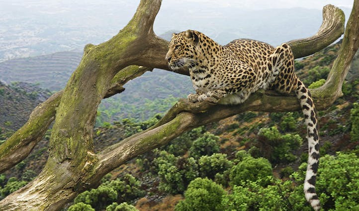 Luxury safaris in Tanzania