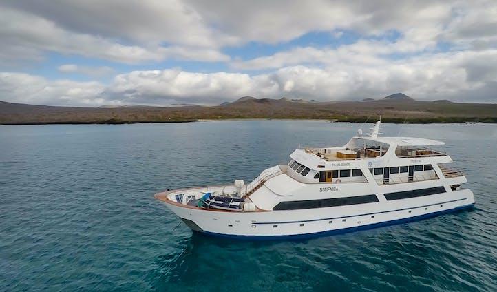Galápagos Sea Star