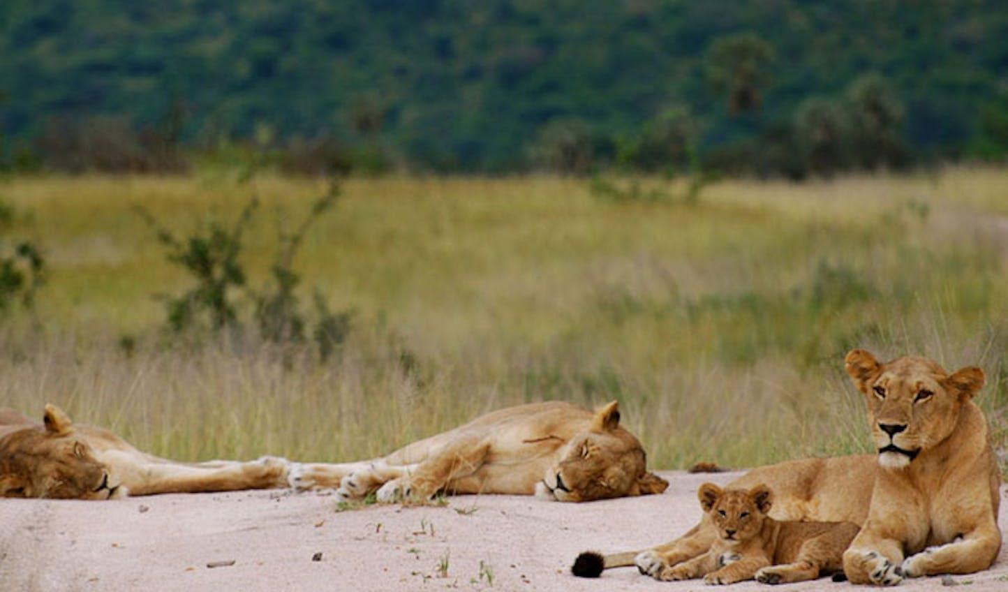 Luxury Tented Safari Kigelia