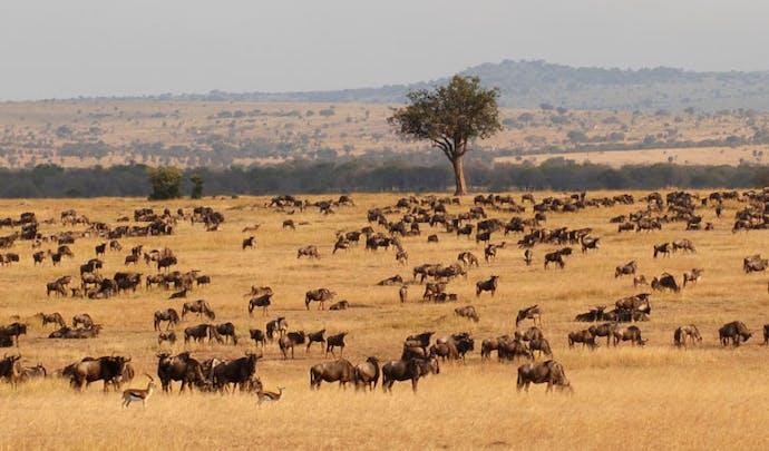 Luxury Africa Holidays