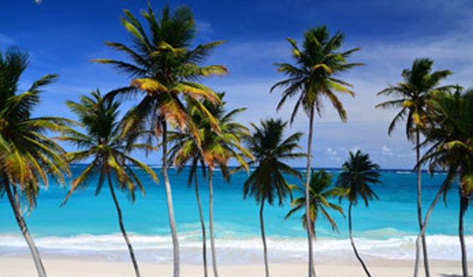 Palm trees in Barbados