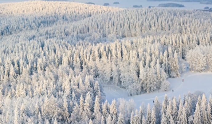Snowy trees in Finnish Lapland