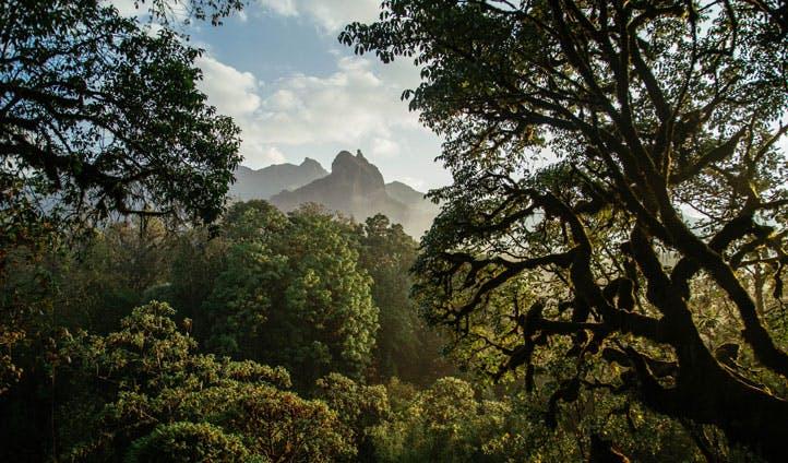 Ethiopia Nature holiday