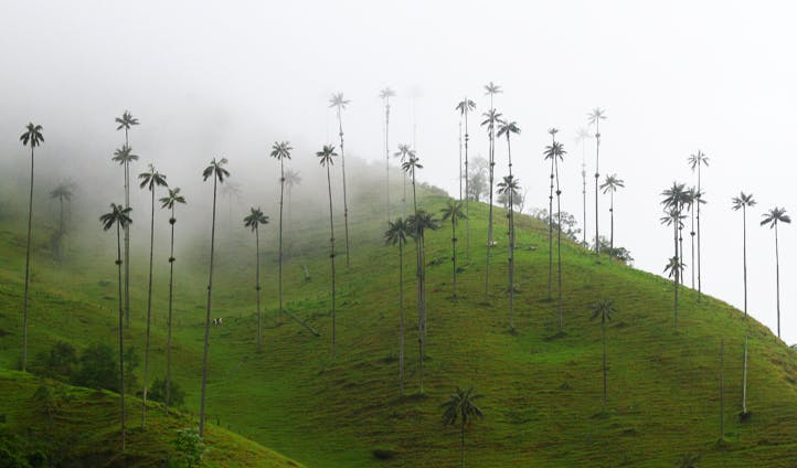 Mist covers Colombia's Cocora Valley