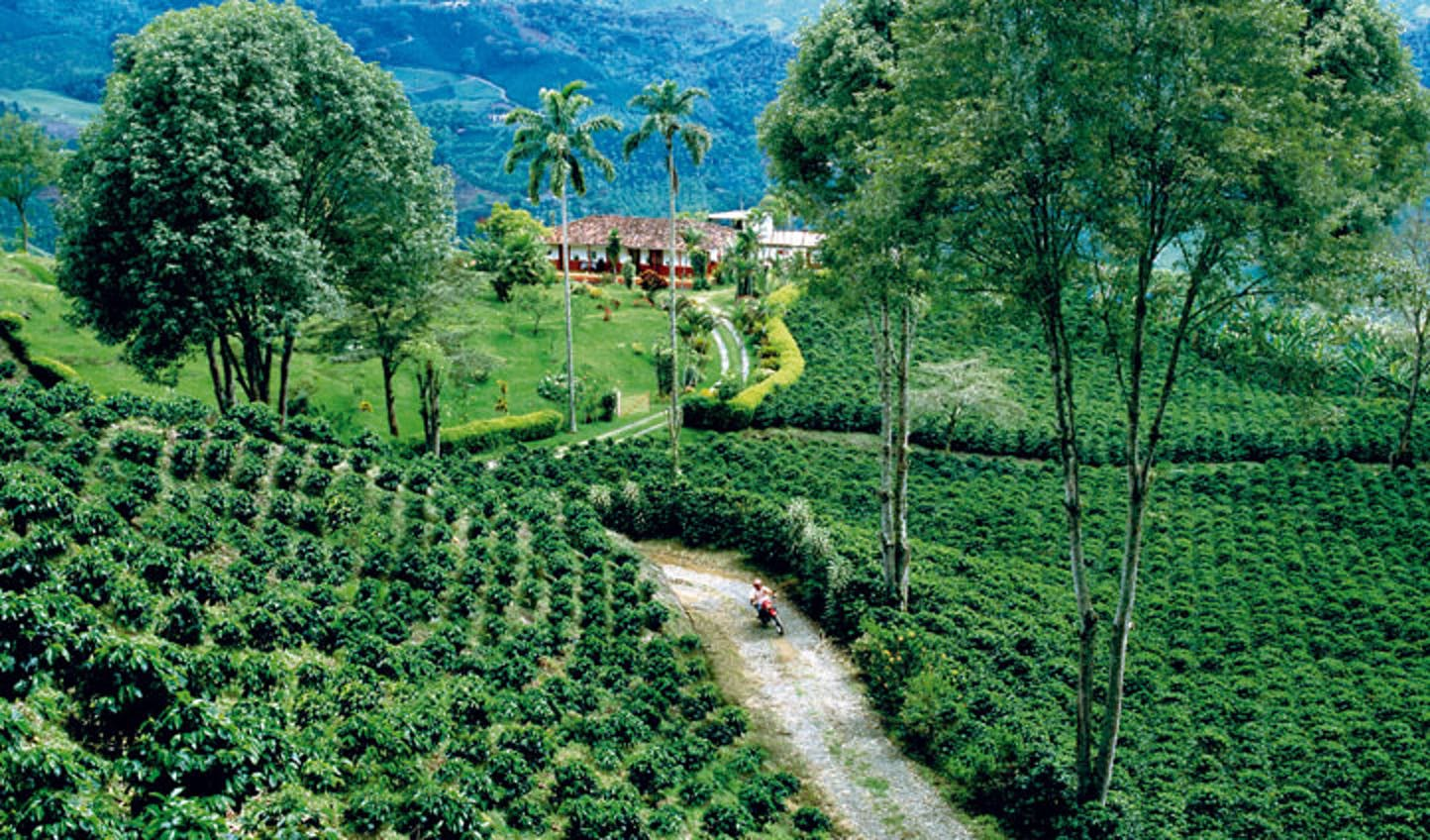A local coffee plantation in Colombia