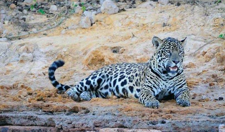 Pantanal holidays