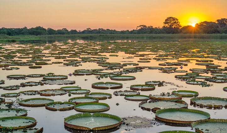 Holidays in the Pantanal