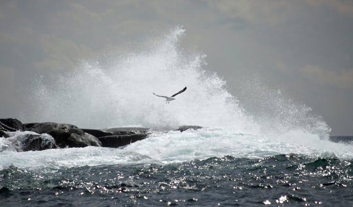 A seabird flies above sea spray on Fogo Island, Canada