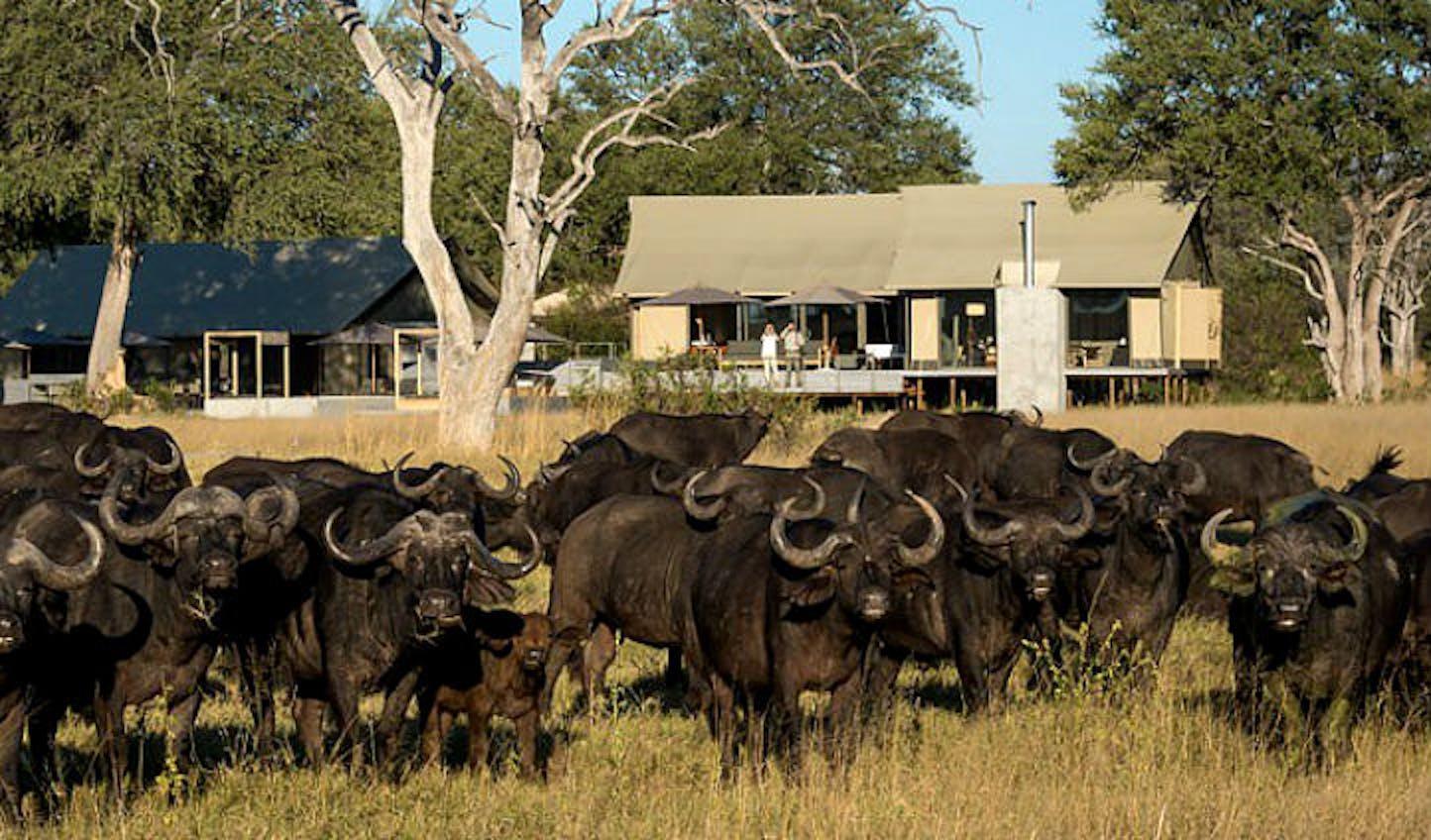 Luxury safari destinations in Africa