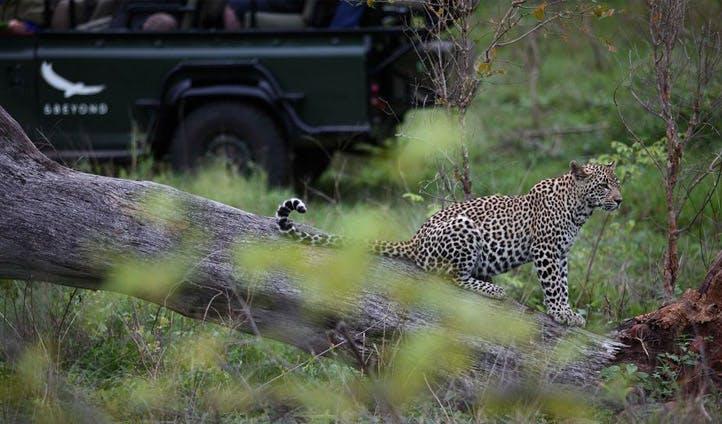 Kirkman safari