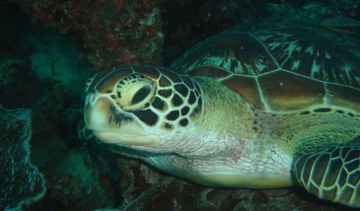 turtles at benguerra