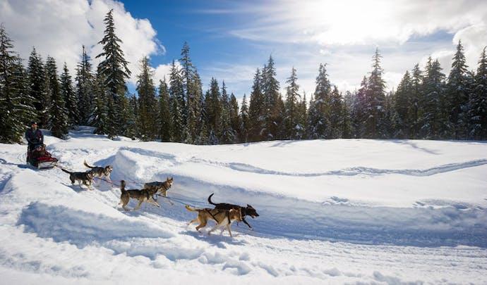 Dog sledding in Whistler, Canada