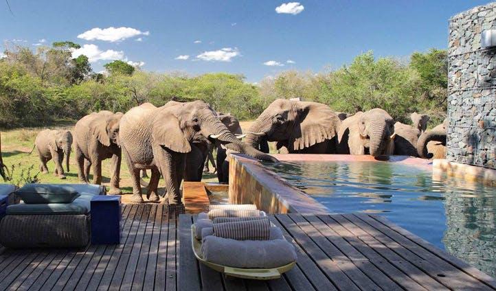 phinda elephants