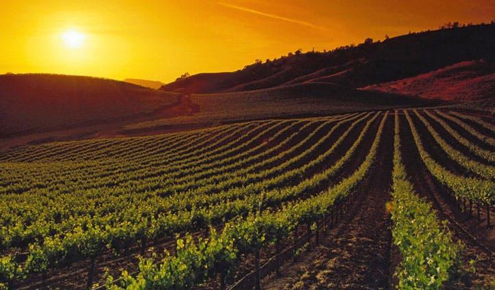 vineyards Napa Valley