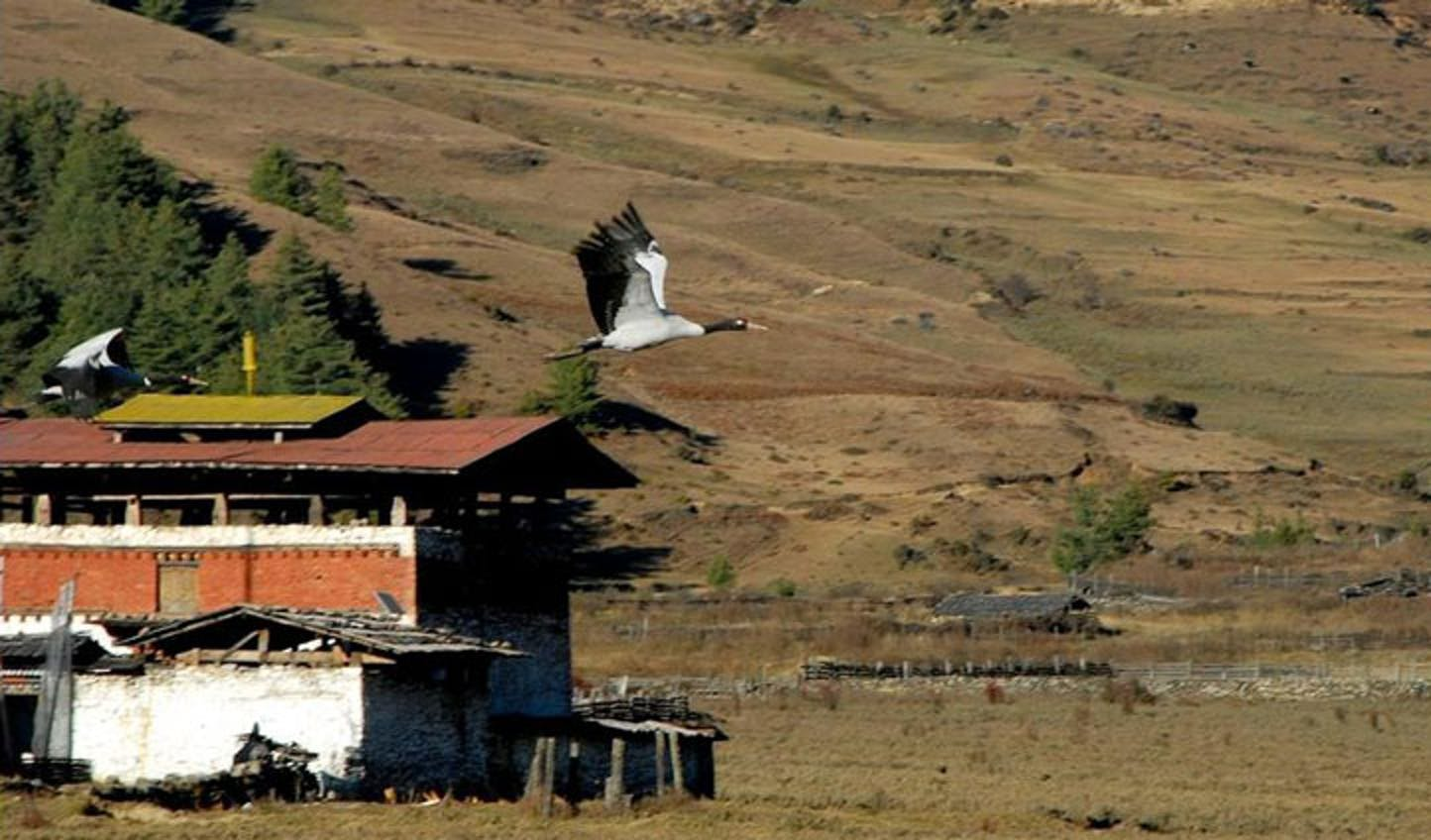 protected wildlife bhutan
