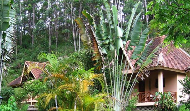 jungle madagascar