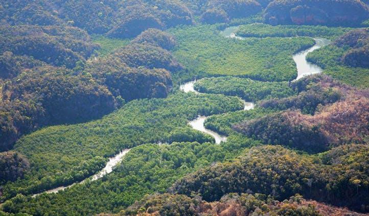 mangrove adventure