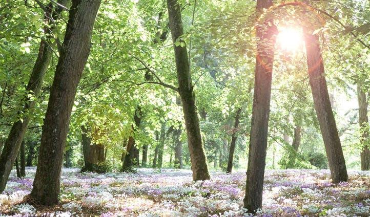 woodlands france