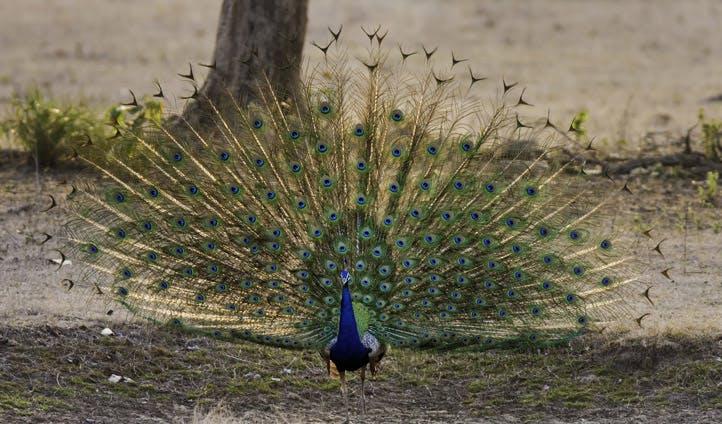 Kanha National Park, India