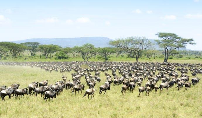 Great Migration in Tanzania | Black Tomato