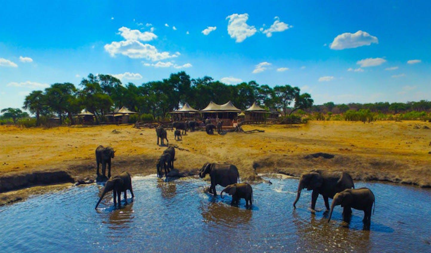Elephants at the watering hole, Somalisa | Black Tomato
