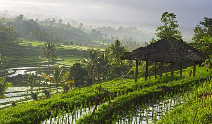 rice terraces of Ubud