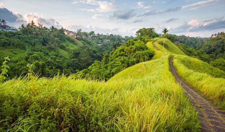 The hills of Ubud