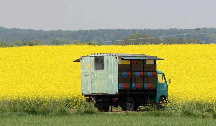 Slovenia's fields of wildflowers